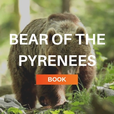 bear of the pyrenees