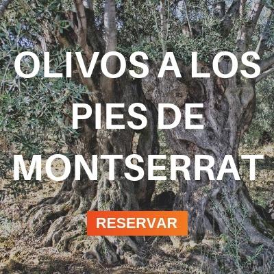 olivos a los pies de Montserrat