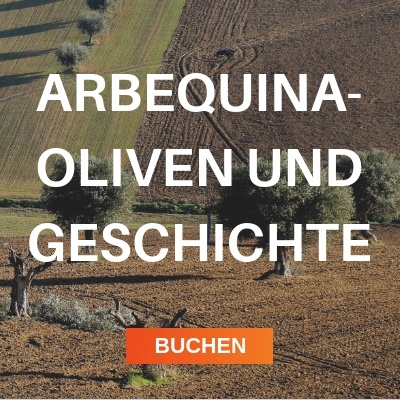 arbequina-oliven
