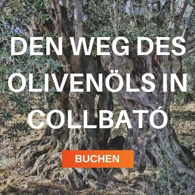 Den weg des olivenöls in Collbató