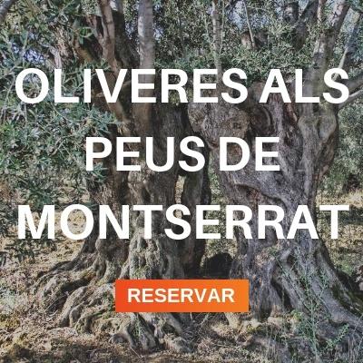 Oliveres a Montserrat